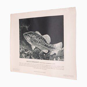 Vintage Largemouth Bass Poster