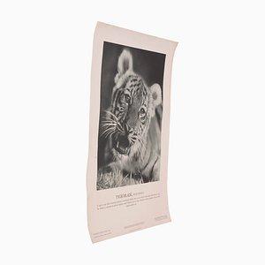 Póster vintage del cachorro de tigre