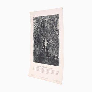 Vintage Gemeine Eichenschrecke Poster
