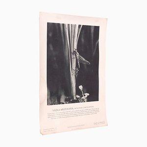 Affiche Skimmer Vintage à Queue Noire