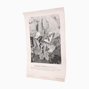 Póster vintage del macaón, años 40