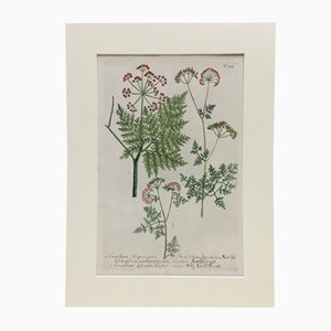 Antikes botanisches Poster