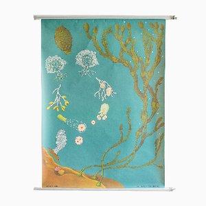 Póster del océano de Hagemann, años 60