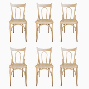 Bistro Stühle aus Bugholz, 1950er, 6er Set