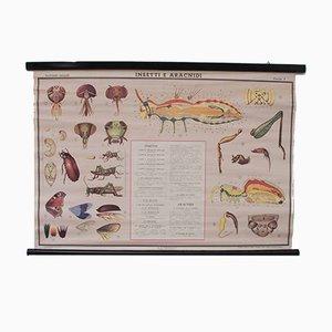 Charte Scolaire sur les Insectes Vintage de Paravia, Italie, 1968