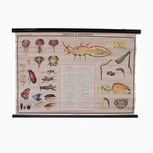 Vintage Italian Educational Insects Canvas Chart from Paravia, 1968