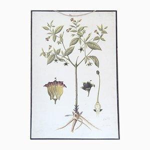 Póster escolar vintage de especies florales