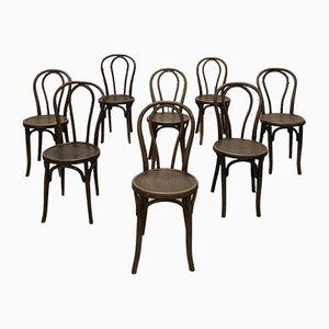 Chaises de Salle à Manger Antiques en Hêtre par Michael Thonet, Set de 8