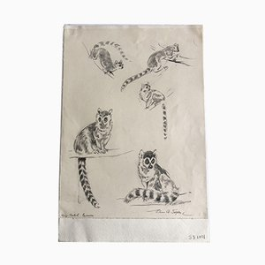 Boceto Racoon vintage en lápiz de Eileen Alice Soper