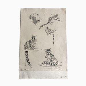 Vintage Waschbärenskizze mit Bleistift von Eileen Alice Soper