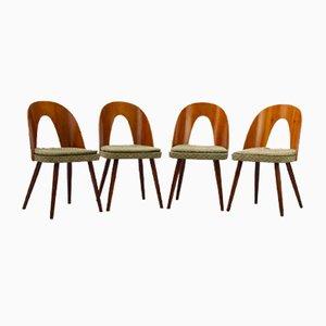 Esszimmerstühle aus Schichtholz von Antonín Šuman für Tatra, 1960er, 4er Set