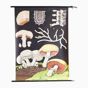Affiche Mid-Century en Bois et Papier, 1960s