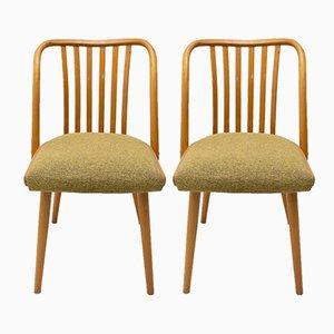 Mid-Century Stühle aus Bugholz von Antonin Suman für TON, 1960er, 2er Set