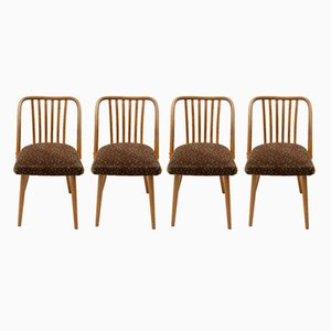 Mid-Century Bentwood Chairs by Antonin Šuman for Jitona, 1960s, Set of 4