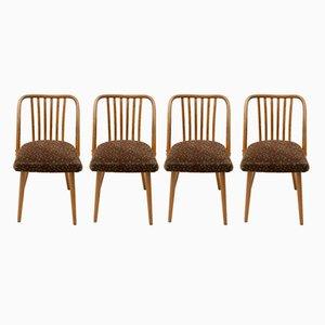 Mid-Century Bentwood Chairs by Antonin Šuman for Jitona, 1960s, Set of 4