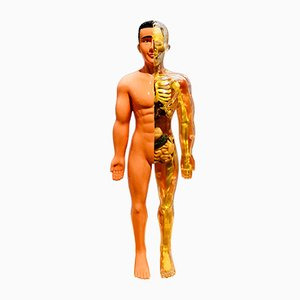 Human Anatomy Doll from Educational Toys, 1980s