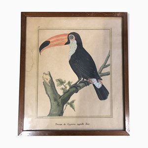Antique Bird Print by François-Nicolas Martinet