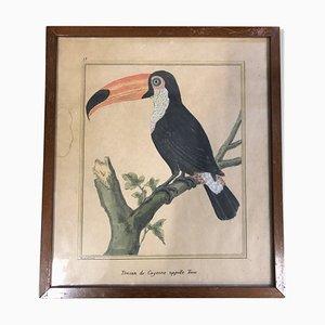 Impresión antigua de pájaro de François-Nicolas Martinet
