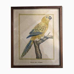 Imprimé Oiseau Antique par François-Nicolas Martinet