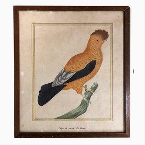 Antique Bird Print by François-Nicolas Martinet