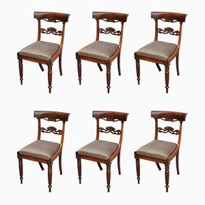 Antique William IV Rosewood Dining Chairs, Set of 6