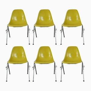 Sillas apilables DSS amarillas de fibra de vidrio de Charles & Ray Eames para Herman Miller, años 60. Juego de 6