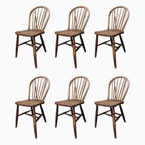 Vintage Esszimmerstühle aus Massivholz von Lucian Ercolani für Ercol, 1950er, 6er Set