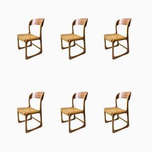 Französische Ulmenholz Schlitten Stühle von Baumann, 1960er, 6er Set