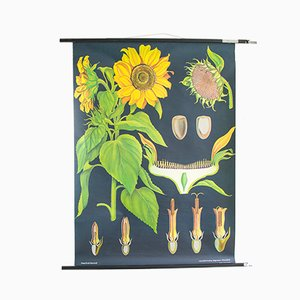 Mid-Century Wood and Paper Sunflower Chart, 1960s