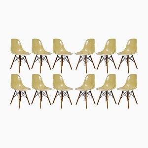 Vintage DSW Stühle von Charles & Ray Eames für Herman Miller, 1970er, 12er Set
