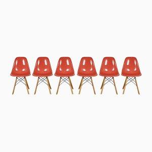 Chaises DSW par Charles & Ray Eames pour Herman Miller, 1970s, Set de 6