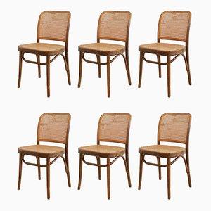 No. 811 Prague Stühle von Josef Hoffmann für FMG, 1960er, 6er Set