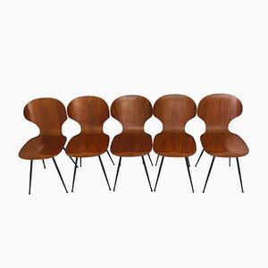 Mid-Century Esszimmerstühle aus Schichtholz & Metall von Carlo Ratti für Lissoni, 1950er, 5er Set