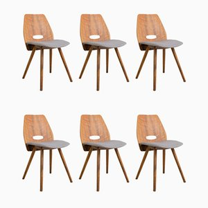 Mid-Century Walnut Dining Chairs by Francis Jirák for Tatra, Set of 6