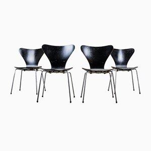 Serie 7 Esszimmerstühle von Arne Jacobsen für Fritz Hansen, 1950er, 4er Set