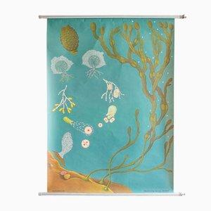 Póster Ocean Seaweed, años 60