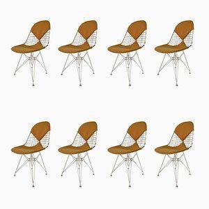 DKR Bikini Stühle von Charles & Ray Eames, 1950er, 8er Set