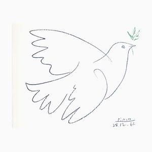 Litografia Peace Dove di Pablo Picasso, 1961