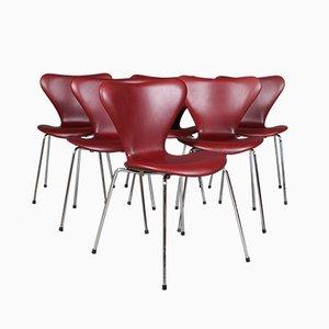 Sillas de comedor modelo 3107 de acero tubular y cuero anilino de Arne Jacobsen para Fritz Hansen, años 60
