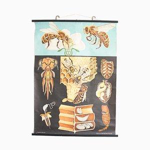 Honigbiene-Poster von Jung Koch Quentell, 1960er