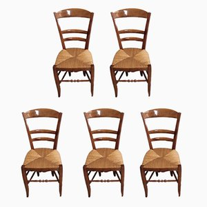 Antique Birch Campaign Chairs, Set of 5