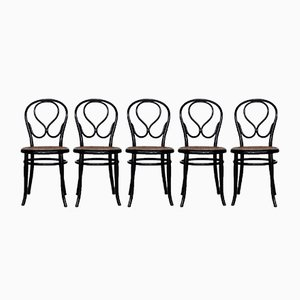 Dining Chairs from Gebrüder Thonet Vienna GmbH, 1930s, Set of 5
