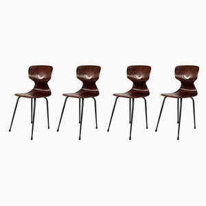 Industrial Rosewood Dining Chairs by Adam Stegner for Pagholz Flötotto, 1950s, Set of 4