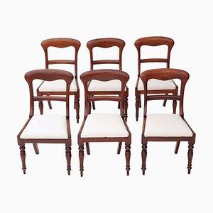 Antike viktorianische Esszimmerstühle mit Gestell aus Mahagoni, 1850er, 6er Set
