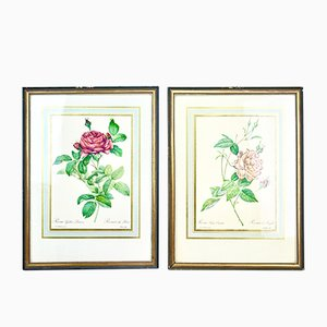 Vintage Floral Posters by P.J. Redouté, 1960s, Set of 2