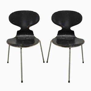 Sedie da pranzo di Arne Jacobsen per Fritz Hansen, 1952, set di 2