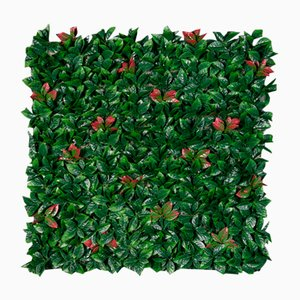 Modular Photinia Wall Vertical Garden Panel from VGnewtrend