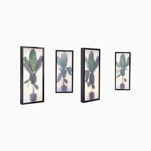Caisson Lumineux Growing Plants avec Collage Photographique par Rem Atelier