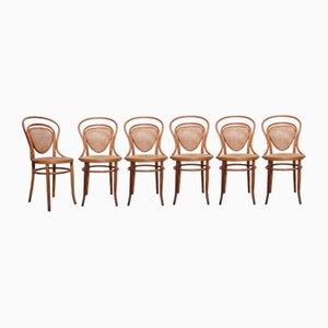 Antike Nr. 41 Beistellstühle aus Bugholz von Jacob & Josef Kohn, 6er Set