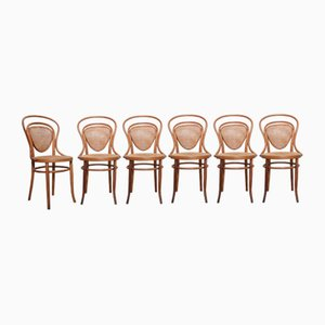 Antique No. 41 Bentwood Side Chairs from Jacob & Josef Kohn, Set of 6